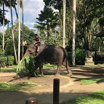 Photo of Elephant Safari Park