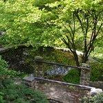 Фотография Botanical Garden of the Department of Charles University