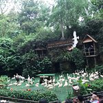 Photo of Jurong Bird Park