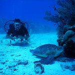 Akumal Bay Dive Center照片