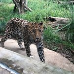Pittsburgh Zoo & PPG Aquarium resmi