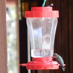 Hummingbird Feeder is on every floor. It is entertaining to watch them flutter around.