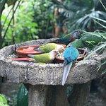 Foto de Butterfly Park Empuriabrava