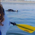 Foto di Sub Sea Tours and Kayaks