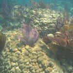 Fan corals on reef in John Pennekamp