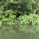 Photo of Gamboa Rainforest Resort Chagres River Boat Tour