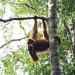 Photo of Sumatranorangutans Jungleadventure - Private Day Tours