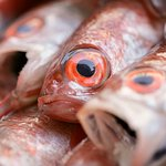 Фотография Okesho Fresh Fish Kaichuen