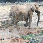 Elephant peut etre Ben?