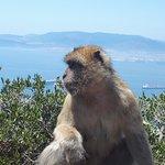 Apes Den Foto