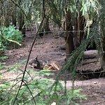 Wild Animals Park (Park Dzikich Zwierzat Kadzidlowo)の写真