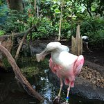 I *could* have touched this spoonbill, though it's not allowed and probably wouldn't have been a