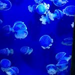 Dear Florida aquarium: Please add signage so that I know that type of sea jellies these are.