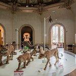 Museum des Sciences Naturelles Foto