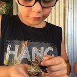Photo of Snail Farm and Fun
