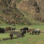 Photo of Gobi Desert