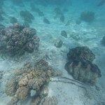 Photo de Giant Clam Sanctuary