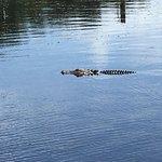Billede af Boggy Creek Airboat Adventures