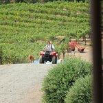 Foto Schweiger Vineyards
