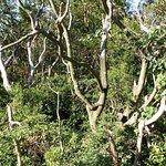 Immergrüne Wälder entlang des Weges