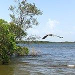 Zdjęcie Gulf Coast AirBoat Charters