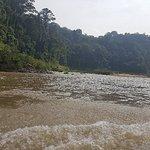 Photo of Taman Negara National Park
