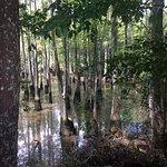 Фотография Dr. Wagner's Honey Island Swamp Tours