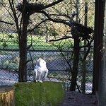 Tiergarten Nürnberg Foto