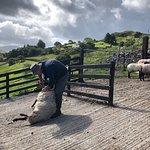 Foto de Killary Sheep Farm