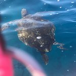Photo de Tenerife snorkelling and kayaking