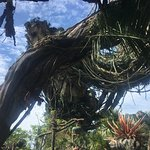 Photo of Pandora – The World of Avatar