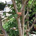 Piggy up tree