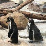 penguins were fun