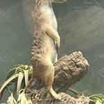 meerkat was a hit