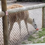 Foto de The Gulf Breeze ZOO