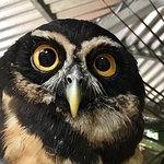 Foto di Tree of Life Wildlife Rescue Center and Botanical Gardens