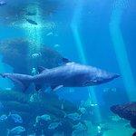Foto van Palma Aquarium