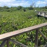 Mangroves Leading to Golden Rock Beach