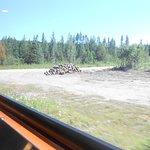 Agawa Canyon Tour Train-bild