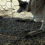 صورة فوتوغرافية لـ Myuna Farm