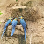 The macaws in the bird house at Henry Vilas Zoo in Madison.