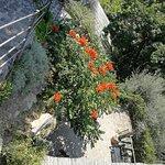 Foto van Giardini La Mortella