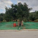 Foto di Terra Creta