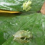 Frogs Heaven Foto