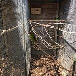 Streichelzoo und Vogelpark Teltow fényképe