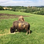 Bilde fra La Ferme Aux Bisons