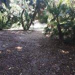Billede af Orto Botanico