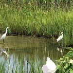 Gordons Pondの写真
