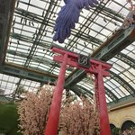 Floral bird takes wing over the cherry blossoms