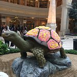 The Galapagos tortoise never looked more beautiful